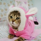 JUQI Rabbit Style Cotton Clothes for Pet Dog / Cat - Pink + White (S)