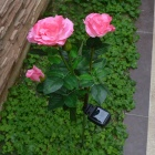 Solar Powered 3-LED Rose Garden Lights