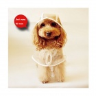 SA-0051 Water-resistant Summer Wear Raincoat Poncho for Pet Cat / Dog - White + Translucent (M)