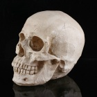 Halloween Costumes Bar Decorate Tricky Resin Skulls Toy - White