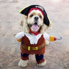 YDL-F4001-M Fashion Pirate Style Suit w/ Hat for Pet Dog - Brown + Multicolor (Size M)
