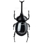 Educational Solar Powered Beetle Toy for Kids - Black