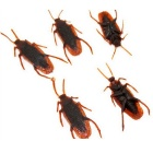 Simulation Cockroach Tricky Toy - Deep Brown (10PCS)