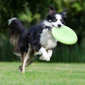 Dogs Training Toy Flexible Soft TPR Foaming Flying Disc Toy For Large And Medium-Sized Dog