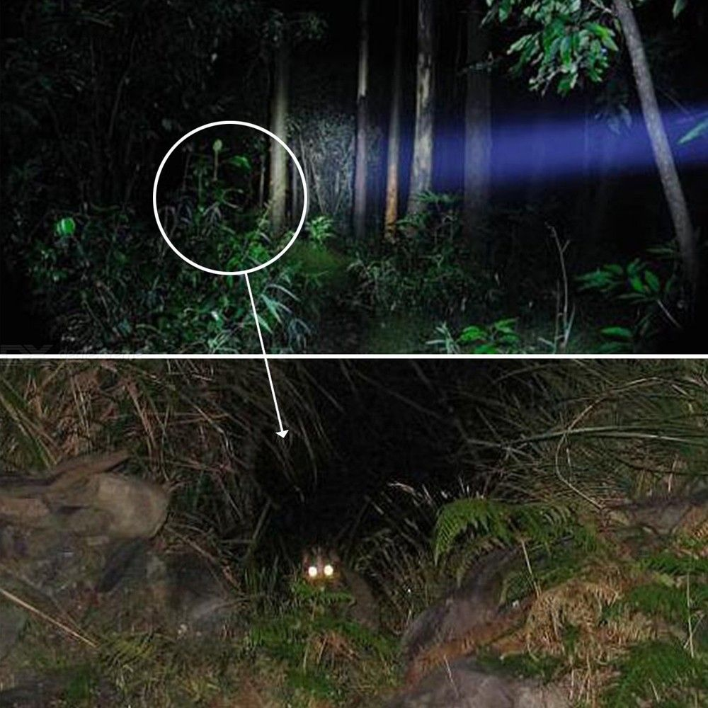C8 XML-T6  5 Mode Tactical Flashlight LED Torch for Outdoor Camping Hunting