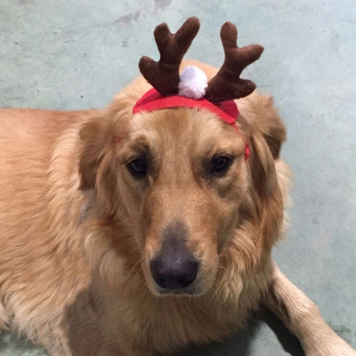 Christmas Antlers Headdress Headband Dogs Cap For Puppy Pet Hats Small Pet Products Red