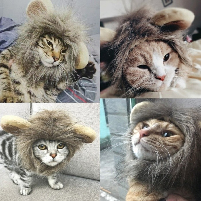 dfae52598 Funny Small Dog Cat Cosplay Lion Wig Head Cap Hat With Ear For Puppy Cats,  ...